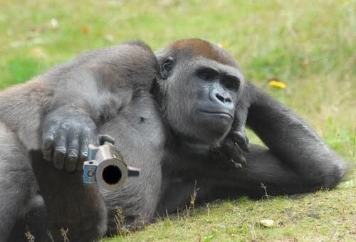 Bear VS Gorilla