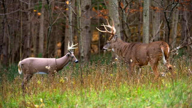 Fooling Deer with Fakes