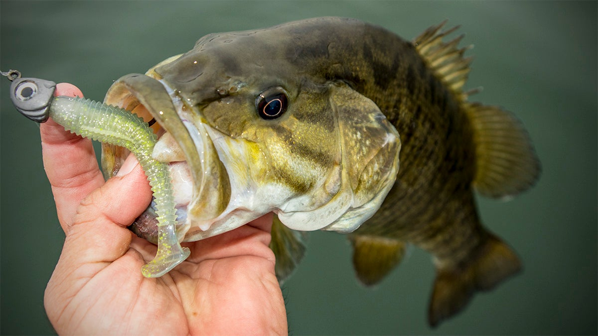 Why to go big with small swimbaits for winter bass fishing for Winter bass fishing