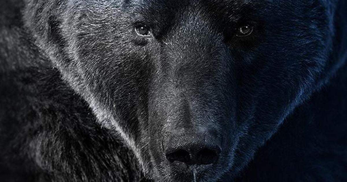 POLL: Should bear hunting in Florida be kept on hold