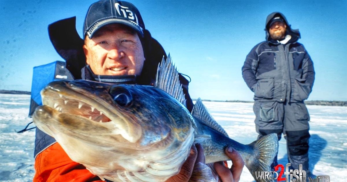 How to ice fishing walleye using spoons and plastics for Ice fishing plastics