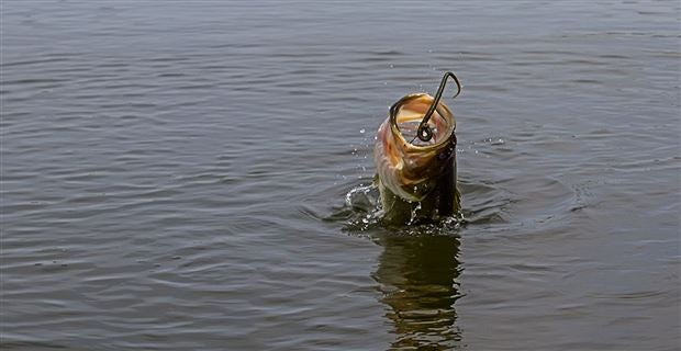 5 Best Rigs for Bass Fishing Soft Plastics