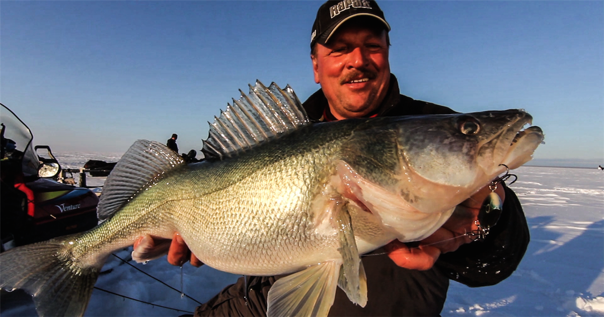 Catch monster walleye using rattling lipless crankbaits for Bass pro monster fish
