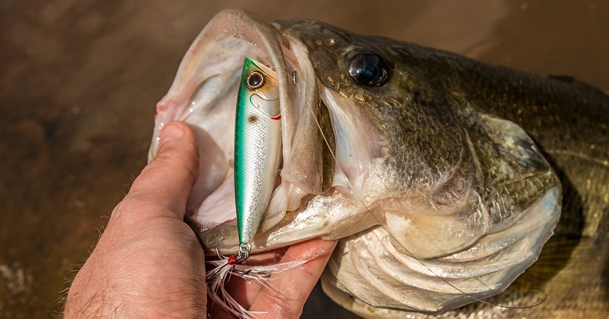 5 spring topwater lures every bass angler needs for Spring bass fishing