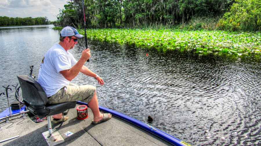 Tips for catching southern bluegills off beds for Bed fishing for bass