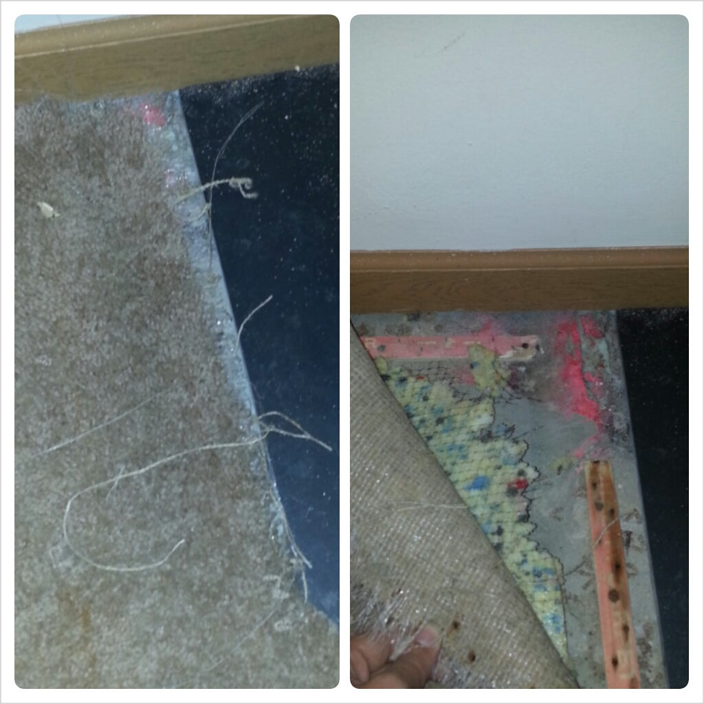 Dog Chewed Area Rug: Dog Chewed Hole In Carpet How To Fix