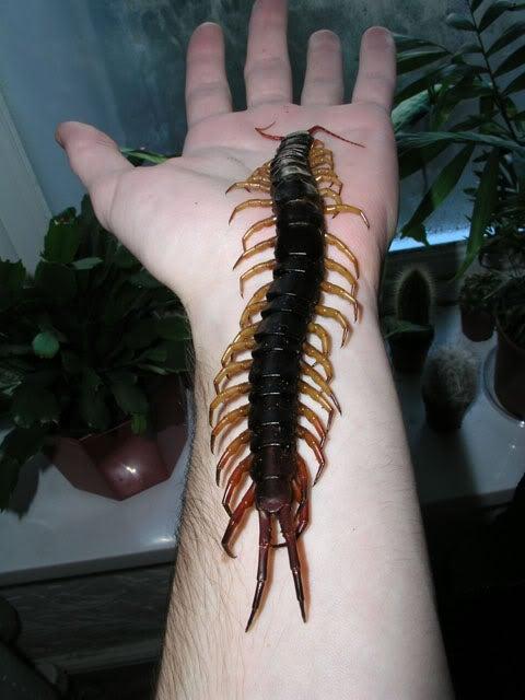 bump when you kill a house centipede