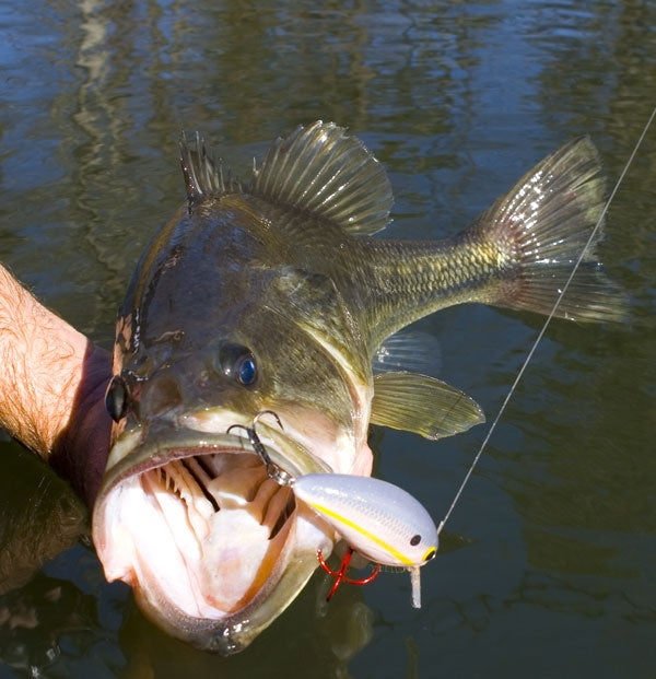 5 reader submitted tackle tweaks for Wired 2 fish
